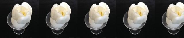 cropped-tulipsmontagefive.jpg